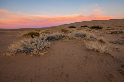 Kelso Dunes, Mojave National Preserve, dawn.